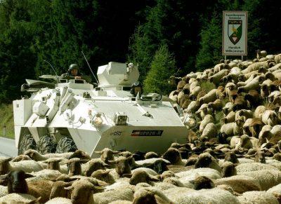 Bundesheer-panzer_schafe