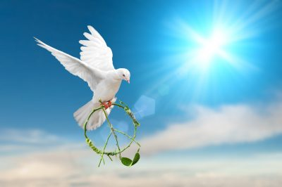 white dove holding green branch in peace sign shapewhite Dove fly on pastel vintage background